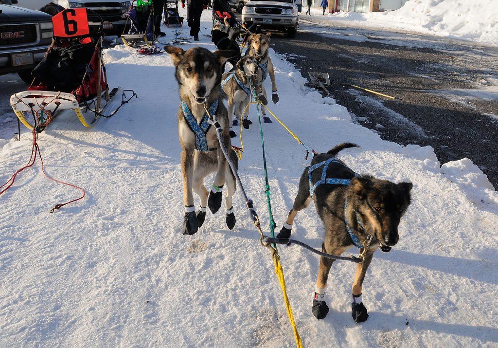 Ashton, Idaho American Dog Derby